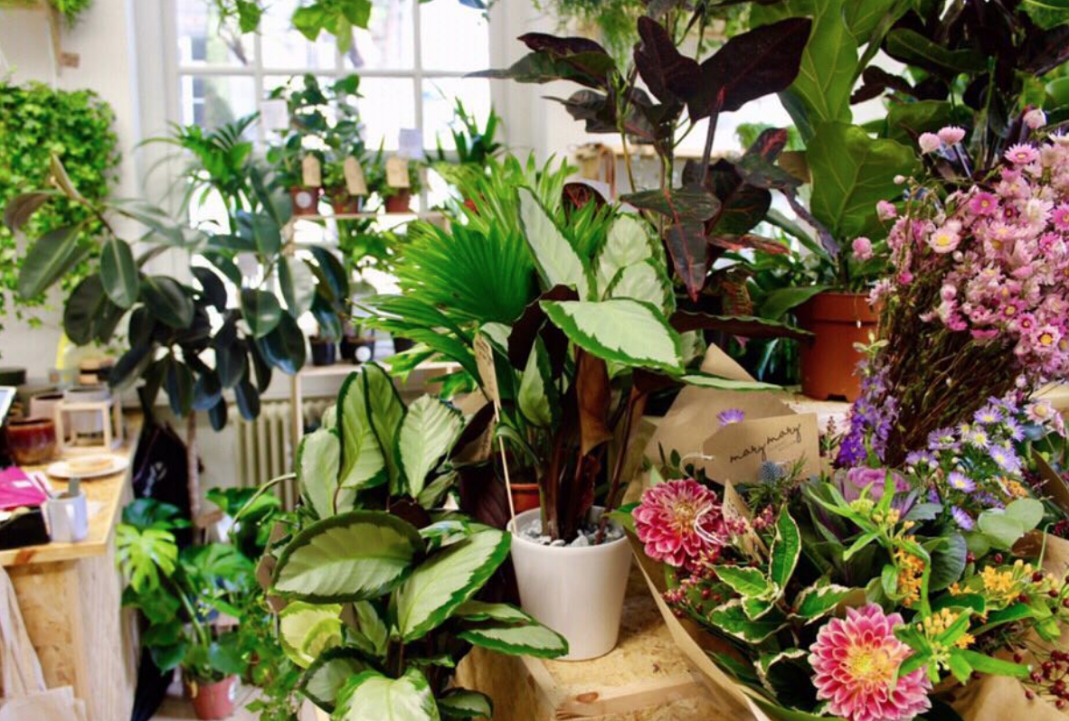 Root House Plants & Mary Mary Floral Design – Independent Liverpool
